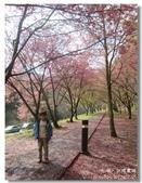 20120225台中武陵農場賞櫻行:DSC00691.jpg