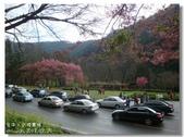 20120225台中武陵農場賞櫻行:DSC00699.jpg