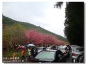 20120225台中武陵農場賞櫻行:DSC00775.jpg