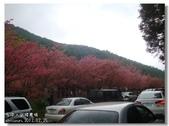 20120225台中武陵農場賞櫻行:DSC00783.jpg