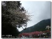 20120225台中武陵農場賞櫻行:DSC00788.jpg