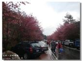 20120225台中武陵農場賞櫻行:DSC00877.jpg
