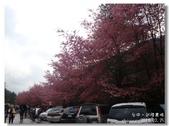 20120225台中武陵農場賞櫻行:DSC00883.jpg