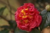 2013-01-06 台北花卉試驗中心: