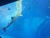 2015/11/04~07 沖繩之旅:201511沖繩123.jpg