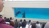 2015/11/04~07 沖繩之旅:201511沖繩171.jpg