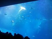 2015/11/04~07 沖繩之旅:201511沖繩131.jpg