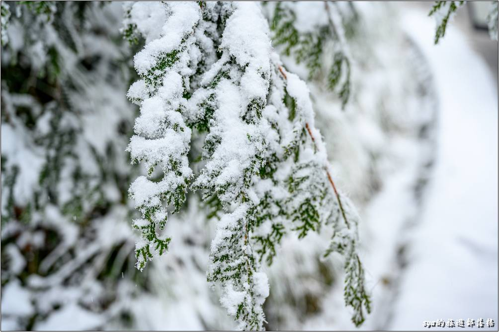 今天開園的時間晚了40分鐘,聽說是剷除地面結冰、以及清除倒在路上的路樹。很難想像為什麼這樣就會倒樹,但仔細看看一旁的植物結冰的狀況,大概就能想向整棵樹結了一層又一層的厚冰,這種量實在是會很驚人!