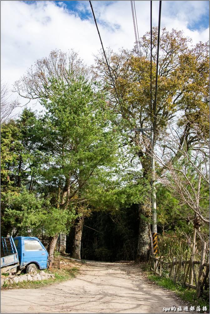 夫妻樹現在已經不復存在了!或許應該說,這對夫妻已經子孫滿堂了!我走到這真的是差點認不出來,為什麼?請大家看看下面這張14年前的照片,這才是夫妻樹阿!現在應該叫「爺爺奶奶樹」了!