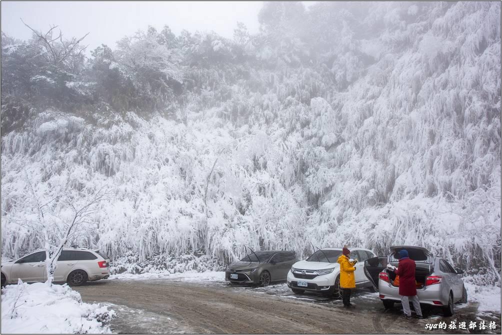 太平山停車場旁的植物,早已被大雪覆蓋成另一種景色。