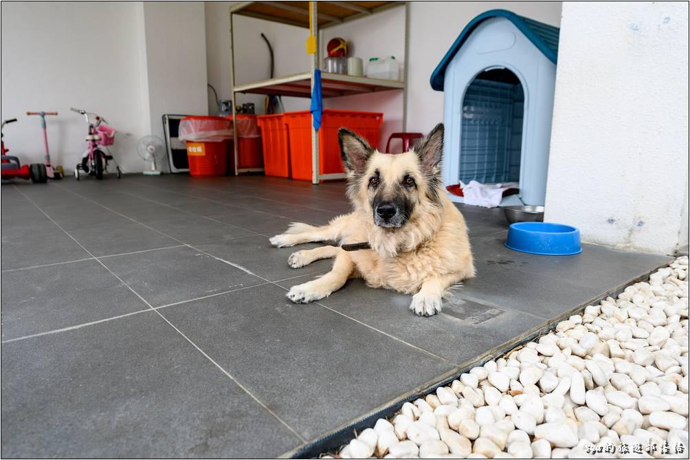 小星星民宿一館的入口還有養著一隻很乖巧的狼狗,雖然有點大隻,但蠻溫馴的!