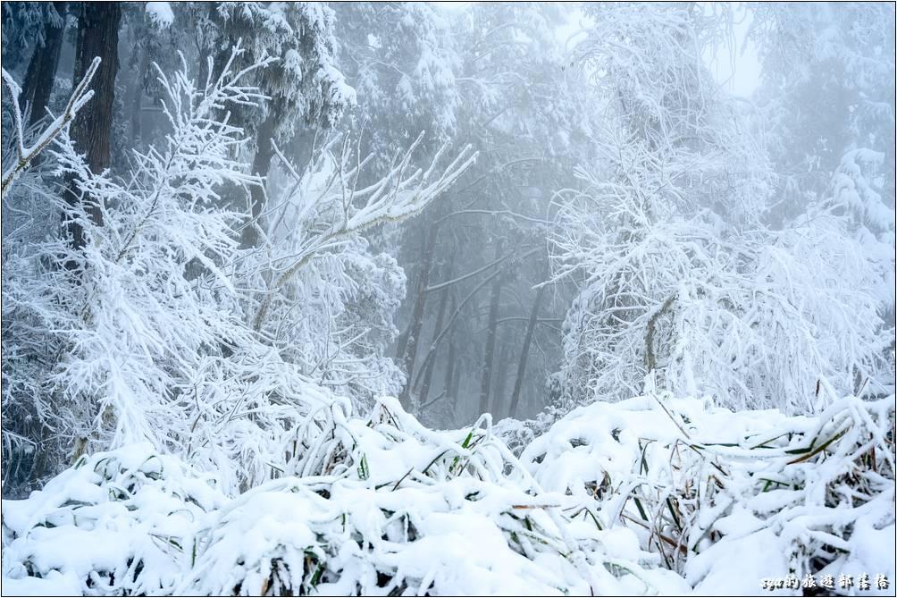 原本覺得平凡到不行的山區畫面,上了一層白紗後,全不都不一樣了!
