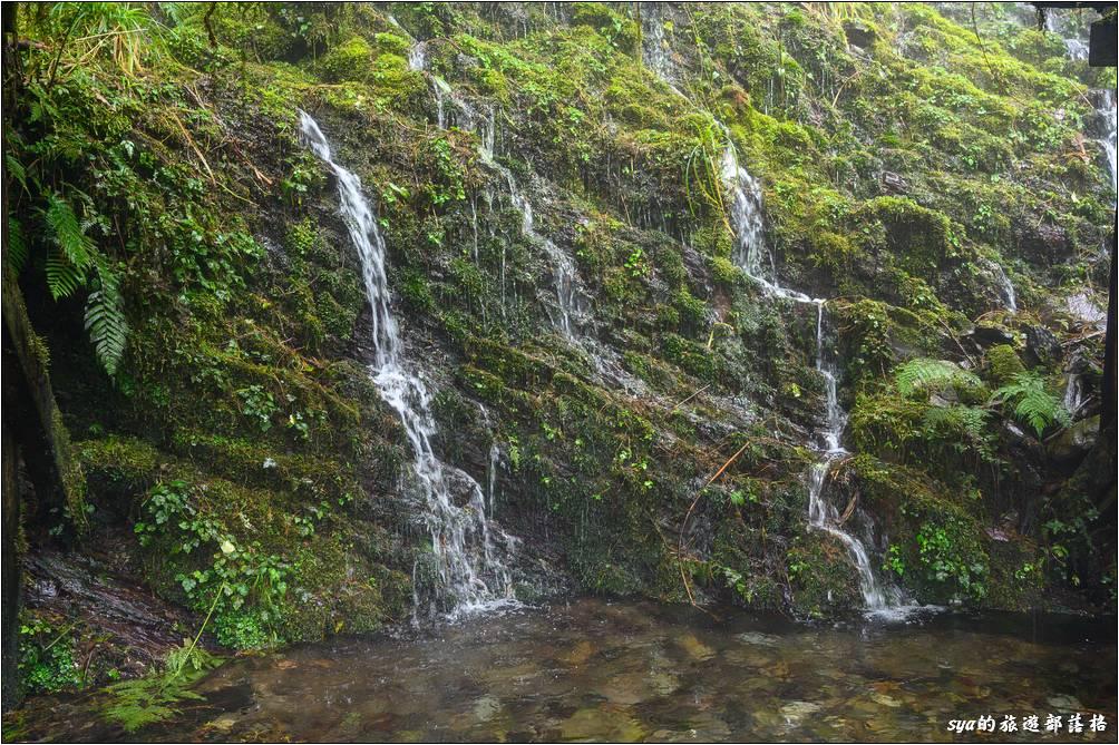 水從山壁中不斷的涓流而下,匯積到下方的小水塘之中。