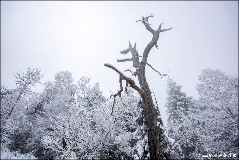 第一次在台灣的賞雪行程大成功