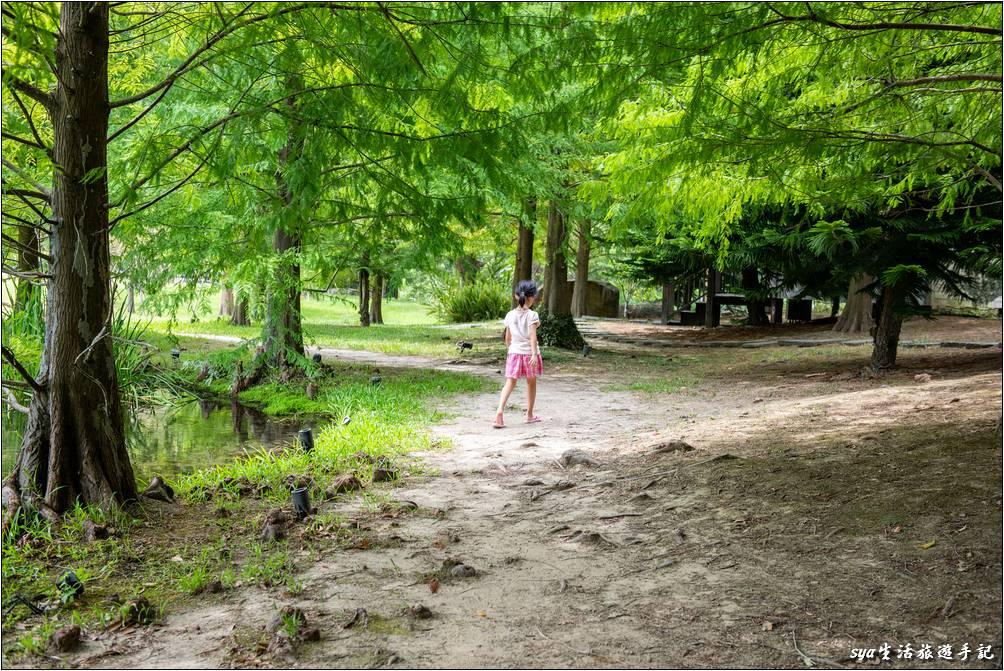 湖區落羽松景觀