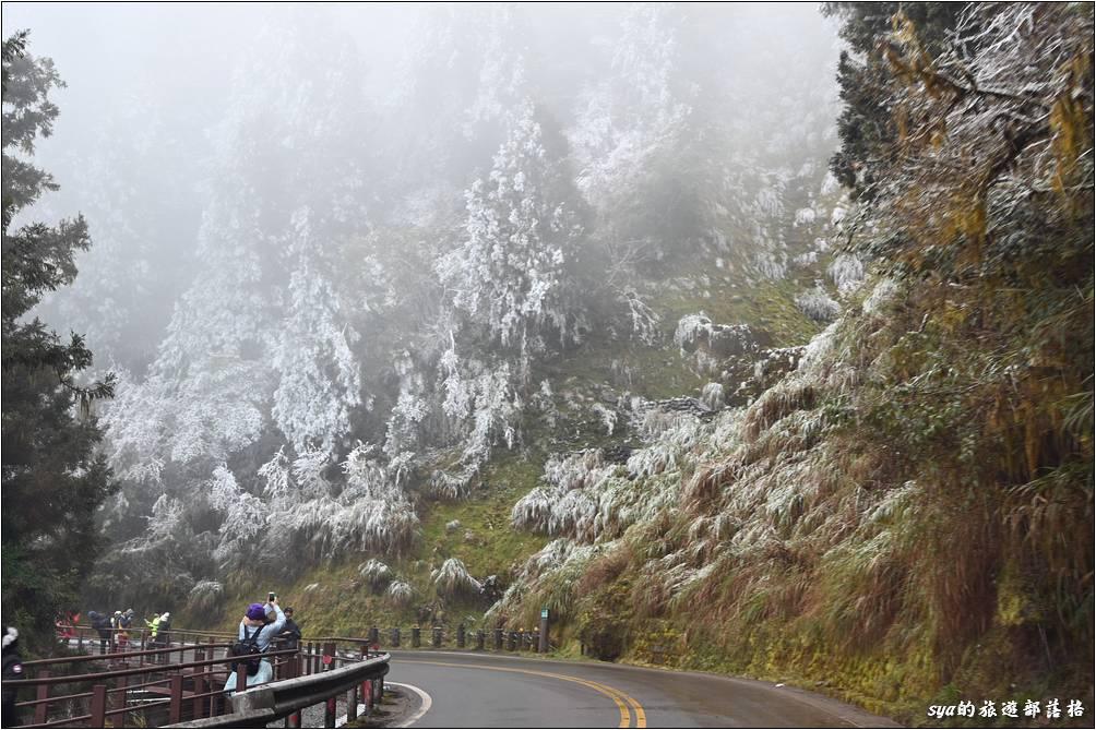 雖然寒流剛過、氣溫回升,但部分路段都還能看到雪白的霧淞。樂貝第一次看到這樣雪白的景色,超驚喜的!