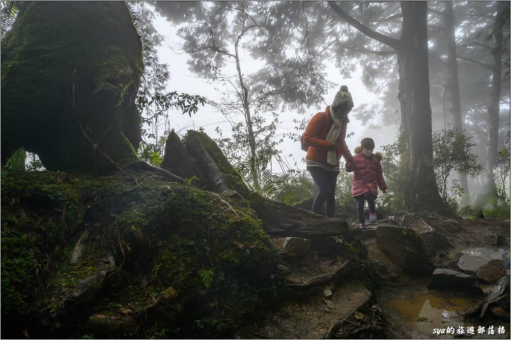 部分路段在雨後積水嚴重,帶小小朋友來走時需要慎選路線,免得運材的鐵軌濕滑,踩踏的話很容易滑倒。