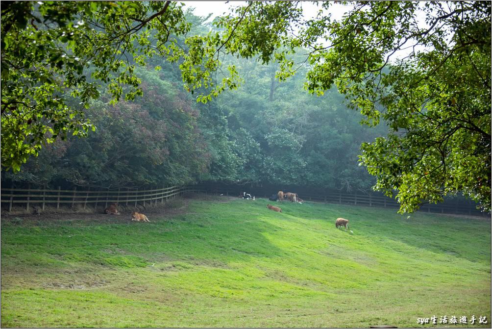 苗栗飛牛牧場