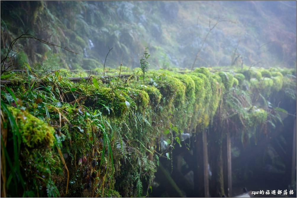 水的故鄉、疊石親水區
