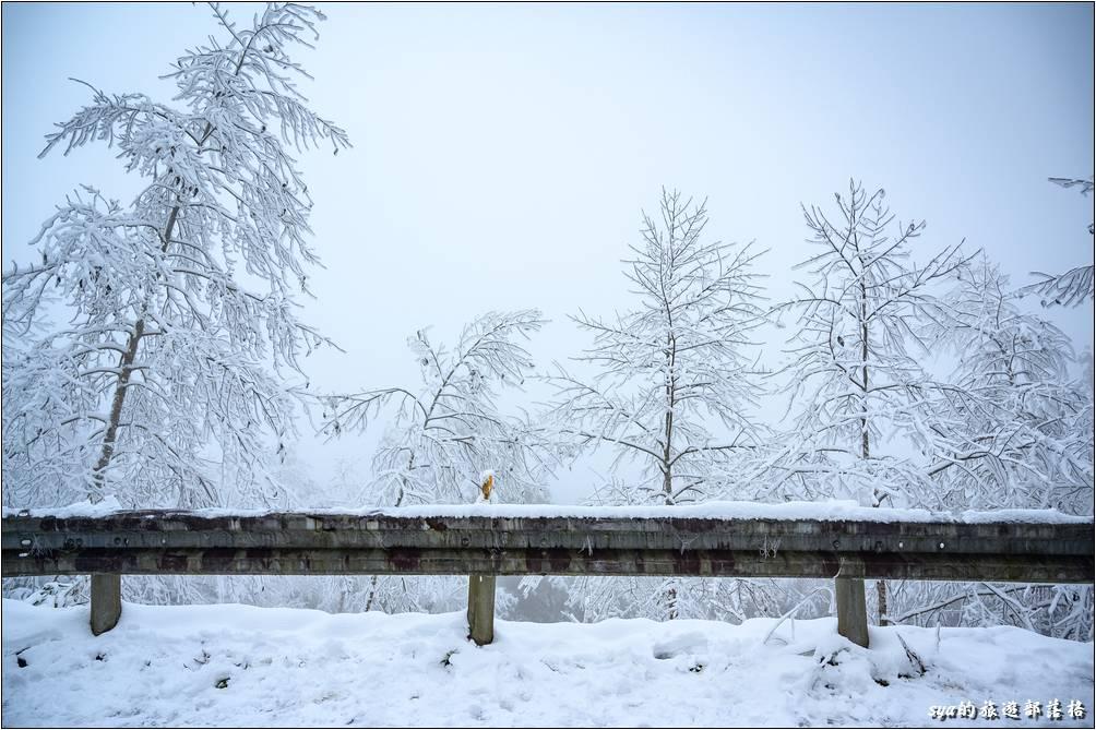 只是個路旁的欄杆,今天看起來都美阿!