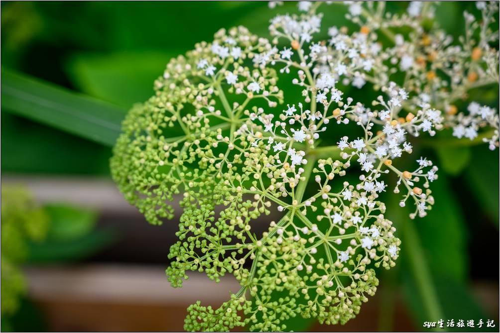 愛心鵲橋旁的植物