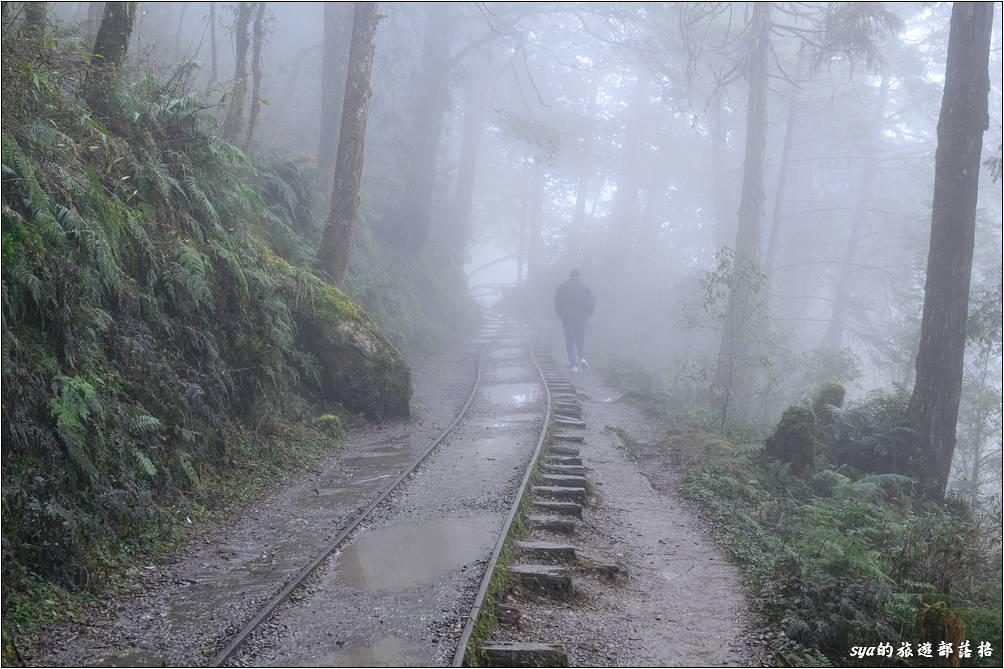 見晴懷古步道隨著山中快速移動的雲霧,步道也時晴時朦朧,要不是這趟地面積水嚴重,幾乎全程都要很注意小朋友的安全,應該是條照片可以拍得很開心的小徑。