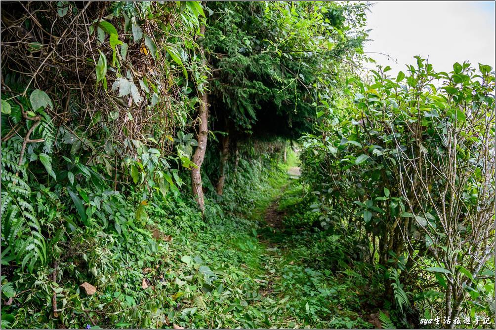 從英仙台有條小徑可以通往新月草原,是條視野、景觀都很不錯的步道。雖然步道的狀態有點原始,但其實還算好走。其中有一段穿梭於松林之下,走起來非常的舒適、怡人~