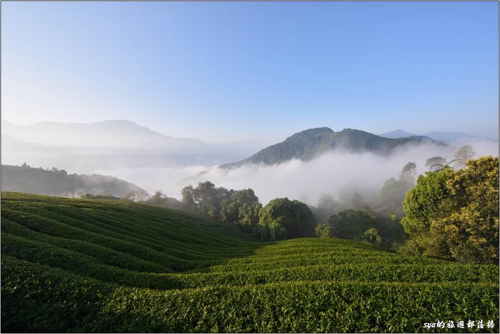 茶園前的雲海