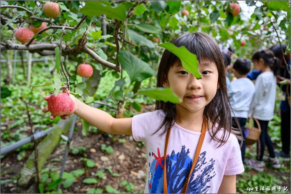 樂貝第一次的摘蘋果體驗