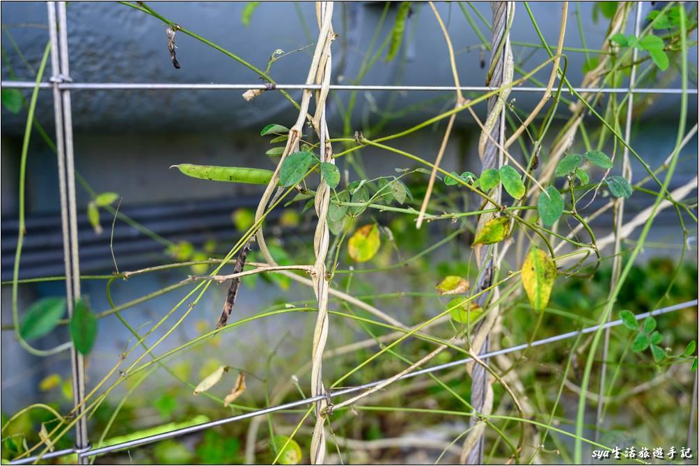 2020年4月完成的津梅棧道綠化工程,讓津梅棧道多了許多的爬藤植物與花卉,縣政府希望透過這樣的綠化過程,讓這裡同時也成為一座天空中的綠色隧道。