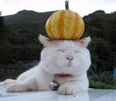 貓咪的五四三 ... 喵 ... :0012.jpg