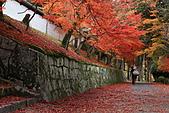 2010日本關西(3)京都東郊楓葉盟:0297.jpg  京都 曼殊院