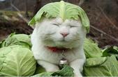 貓咪的五四三 ... 喵 ... :0013.jpg