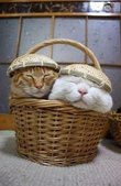 貓咪的五四三 ... 喵 ... :0014.jpg
