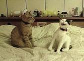 貓咪的五四三 ... 喵 ... :0017.jpg