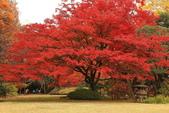 秋之戀(三) 庭園、森林、往事如昨:0150.jpg 六義園