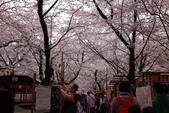 日本櫻花(11) 京都平野神社與嵐山:0710.jpg 平野神社