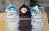 貓咪的五四三 ... 喵 ... :0018.jpg