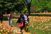 北國之春(1) 戀人協奏曲:0676.jpg 昭和記念公園