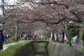 日本櫻花(14) 哲學之道與蹴上鐵道:0837.jpg 哲學之道