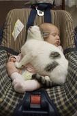貓咪的五四三 ... 喵 ... :0019.jpg