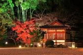 秋之戀(14) 京都秋夜:1161.jpg 京都大覚寺