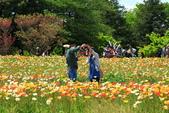北國之春(1) 戀人協奏曲:0677.jpg 昭和記念公園