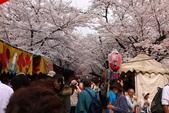 日本櫻花(11) 京都平野神社與嵐山:0711.jpg 平野神社