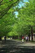 北國之春(8) 春日花海:0645.jpg 昭和記念公園
