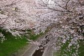 春(2) 藝界人生:0169.JPG 江川せせらぎ緑道
