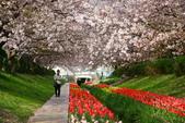 春(2) 藝界人生:0177.JPG 江川せせらぎ緑道
