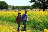 北國之春(1) 戀人協奏曲:0690.jpg 昭和記念公園