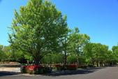 北國之春(8) 春日花海:0642.jpg 昭和記念公園