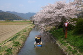 春(3) 似是故人來:0279.JPG 近江八幡水鄉めぐり